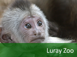Luray Zoo